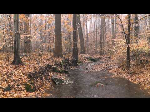 Rain in the Woods (Nature Sounds Series #2) - Rain Sounds, Woodland Ambiance, Trickling Streams