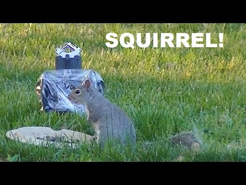 Binaural Birds of a Feather!  Bird and Squirrel ASMR Sounds, Flapping Wings, and Crunching Seeds
