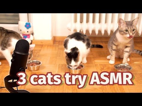 3 cats try ASMR 🙀 viral pet MUKBANG 😻