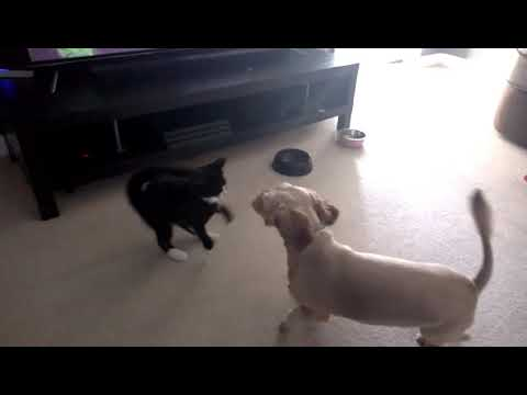 Honey and Sally, playing and chasing each other. slo motion. not asmr. just wanted to share