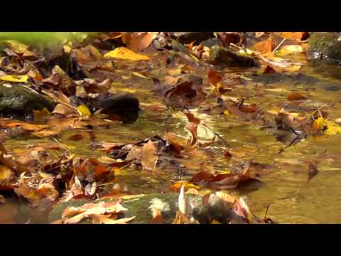 Relaxing Nature Journey & Walkabout #8 - Fall 2013 - Crunchy leaves, Trickling stream, Flute