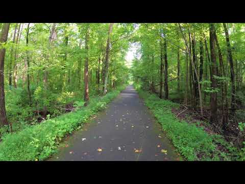 ASMR Hiking Binaural Hiking on a Paved Forest Path with Summer Birds Noises