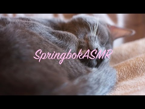 Binaural ASMR Krinkle Kitty: Cat Wearing a Paper Bag Shirt with Crinkles and Purring