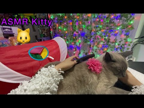 ASMR  Kitty Combing & Tapping (Cat Kitty Therapy For Mental Health) Siamese Cat Blue Point Breed 🐱