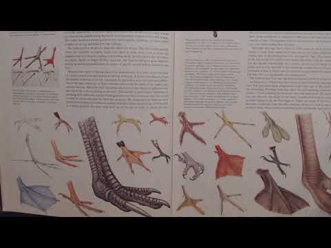 ASMR ~ Gum Chewing & Reading Bird Book (Soft Spoken / Pointer)