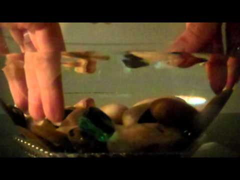 ~~~Water, Pebbles, Shells & Hands~~~ soft spoken visualization relaxation