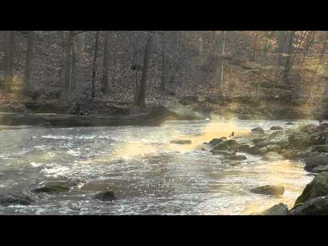 Morning Mist (Nature Sounds Series #1) Flowing Creek, Woodland Ambiance
