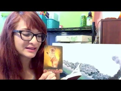 Cats Oracle Card Reading ASMR