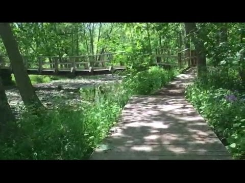 Guided Relaxation and Meditation: The Peaceful Forest
