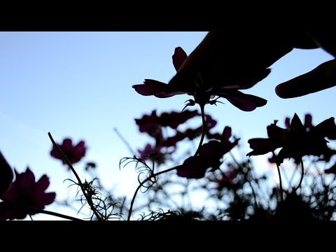 ASMR A Shadow Play with Soundscape for Relaxation & Sleep