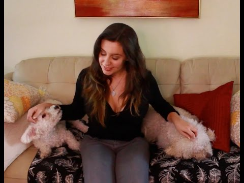 ASMR: Puppy Love (binaural, Brushing, Close up intense doggie sounds)