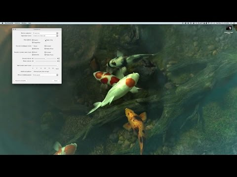 ASMR Live Desktop Demo: Sharks 3D and Koi Pond 3D with water sounds